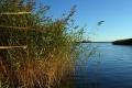 В реке Тобол обнаружено тело без вести пропавшего юноши