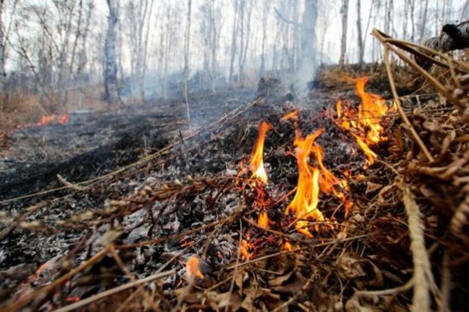 В Курганской области объявлен пожароопасный сезон