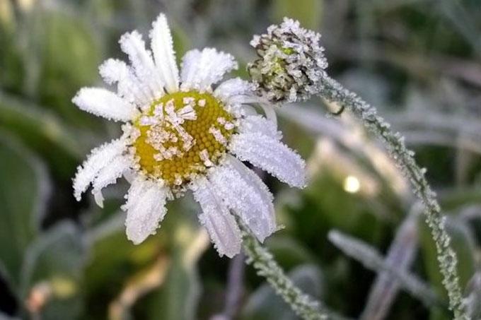 11 и 12 августа по области ожидаются заморозки