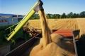 С площади 1104 тысяч гектаров намолочено 2235 тысяч тонн зерна