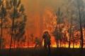 Число лесных пожаров в этом году в Зауралье снизилось на 35%