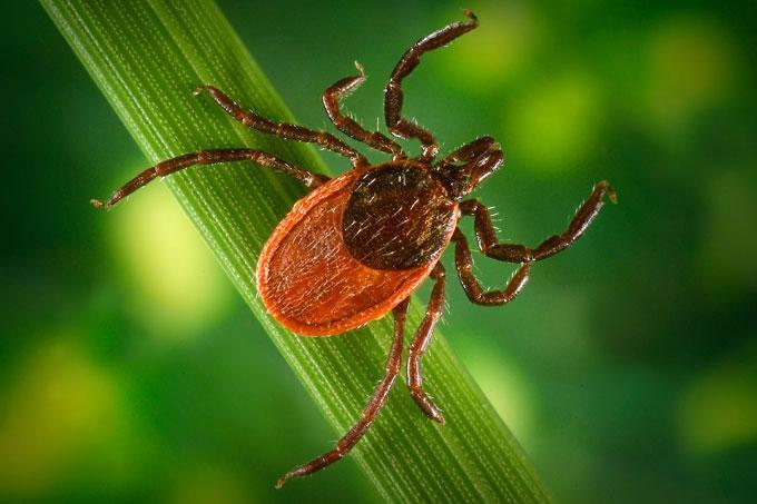 В Зауралье зарегистрирован первый случай подозрения на заболевание клещевым вирусным энцефалитом