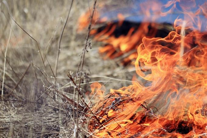 Зауральцы продолжают сжигать мусор и разводить костры вопреки запретам