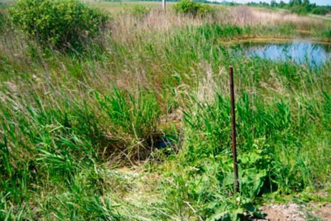 Вблизи деревни Жикина обнаружены костные останки человека