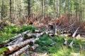 В Курганской области на особо охраняемой природной территории вырублены деревья