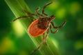 25% пострадавших от укусов клещей работали на дачах и садовых участках
