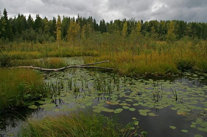 В окрестностях Шадринска в болоте обнаружено тело мужчины