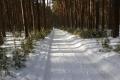 Погода выходных: тепло и снежно
