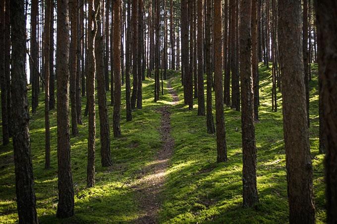 Режим чрезвычайной ситуации в лесах регионального характера отменён