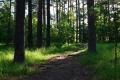 В Зауралье снят запрет на посещение лесов