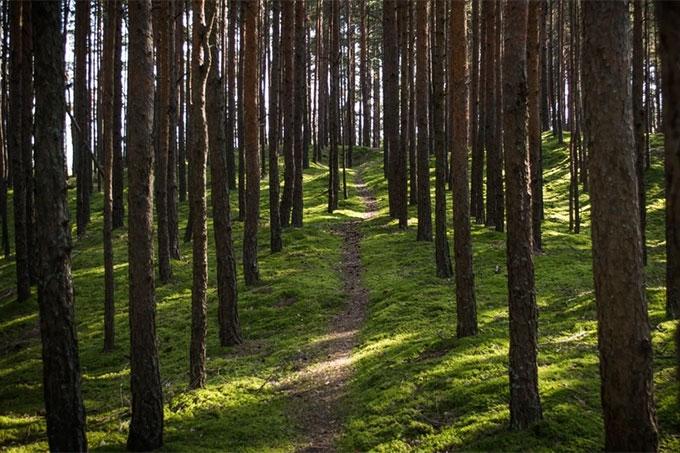Ограничение на посещение лесов в Шадринске снято