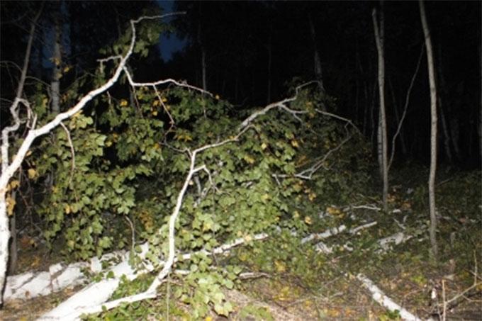 Мужчина погиб от неосторожно срубленного дерева