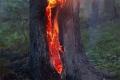 В Шадринске задержан подозреваемый в поджоге леса