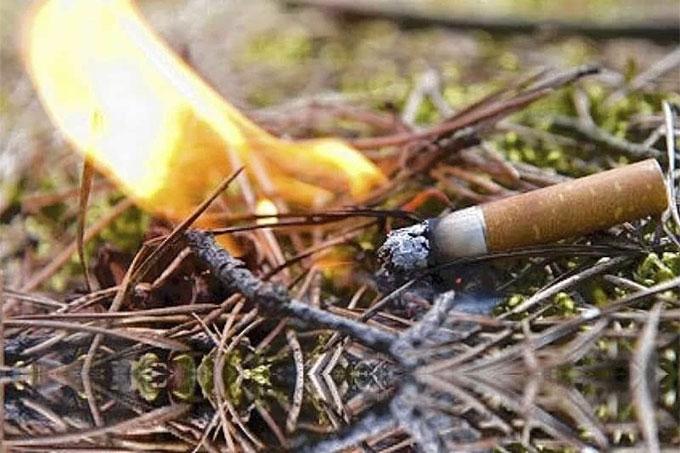 Вынесен приговор виновнику лесного пожара