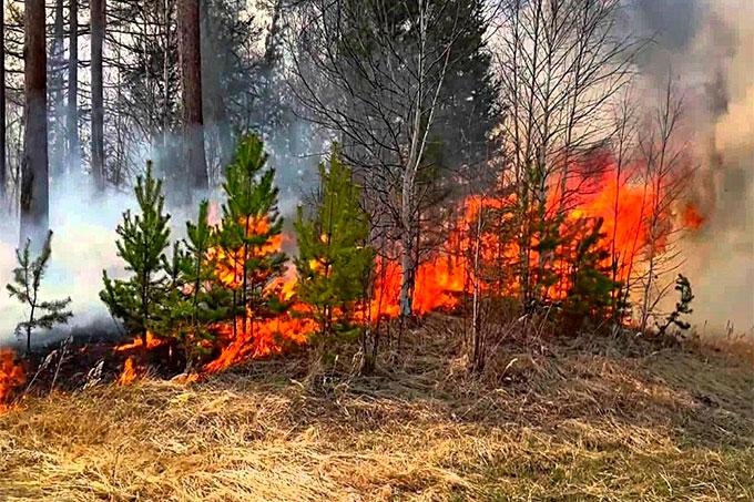 В регионе введен запрет на посещение лесов