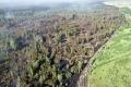 Крупный лесной пожар в Мишкинском районе ликвидирован