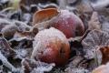Местами по области возможны заморозки