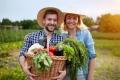 Фермеры получили в 2020 году субсидий на сумму более 560 миллионов рублей