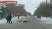 """Без комментариев - мобильное видео """"Собаки пешеходы"""""""