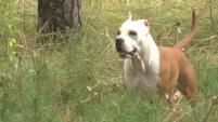 Шадринская собака-чемпион