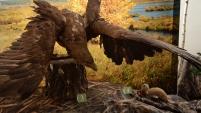 Открытие зала живой природы в музее