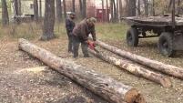 В шадринском бору спиливают старые деревья
