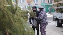 В Шадринске начал работу ёлочный базар