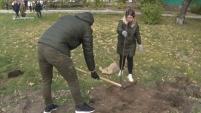 Новые зеленые насаждения в сквере Воинской славы в Шадринске
